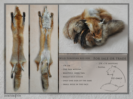 Sold. european red fox by DoktorFox