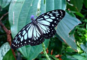 Butterfly 21 by Michies-Photographyy