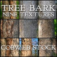 Wood:  Bark Texture Pack by Cobweb-stock