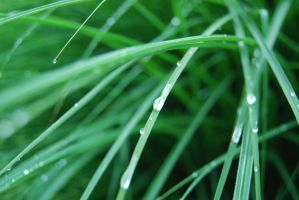 Dew on Grass by LogicalXStock