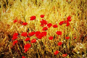 DANCE OF THE POPPIES by mecengineer