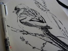 Finch - inking by tangerine-blossom