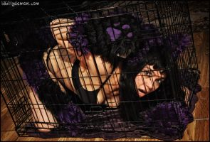 Fluffy Purple and Black Kitty in Cage by Lady-with-a-buzzsaw