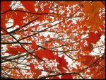 Autumn's Red by Imperfected-Wisdom