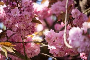 Spring is here by JSC48