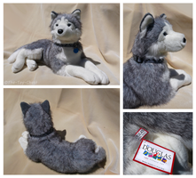 Douglas Cuddle Toys - Broderick Husky by The-Toy-Chest