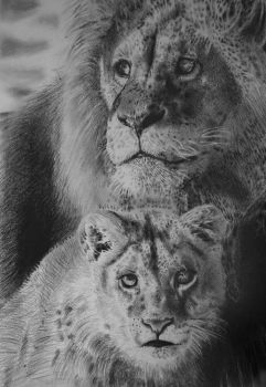 lion and cub by chrisbaggott