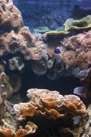 Aquarium Stock 50 by Malleni-Stock