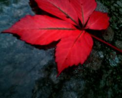 Red Leaf by AngeLiCiOuZz