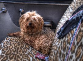 Dog - HDR by Louis-photos
