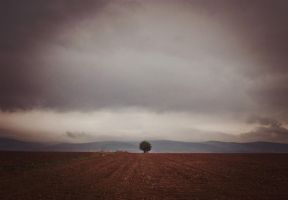 A tree that cries without a sound by ViktoriaGloriam