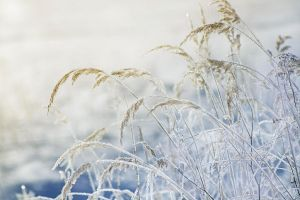 iced morning by katha21290