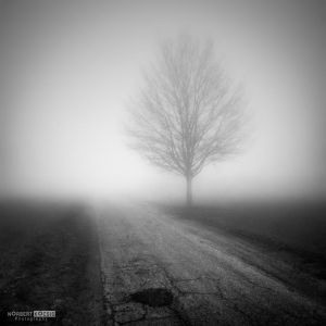 Next to a road in the fog in December by NorbertKocsis