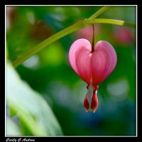 Bleeding Heart II by CecilyAndreuArtwork