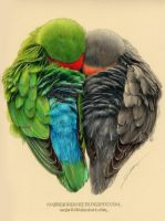 Lovebirds by AmBr0
