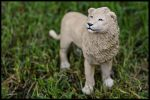 :.The white lion.: by XPantherArtX