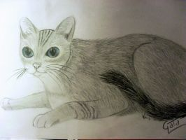 Cat with blue blue eyes xD by Gacia483