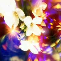 The world of dancing flowers by Mishelangello