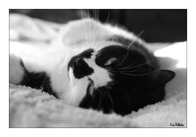 Cat in Black and White by runnerboy49