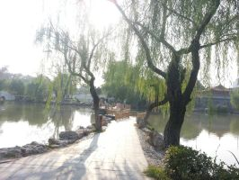 Pathway through the trees by Laura-in-china
