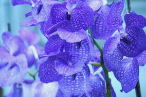 orchids floriade 16 by ingeline-art