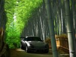 TVR in Bamboo by h1gh3r-r3s