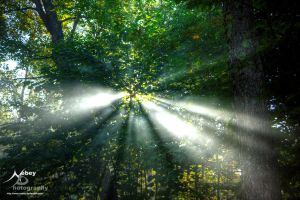 HDR Rays of Light 2 by Nebey