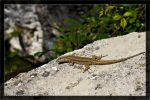 Lizard 02 / Look out by deaconfrost78
