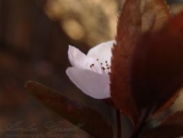0032 - A Little Shy by AmberPhotography