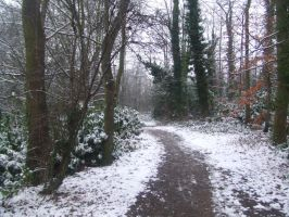 Snowy Path by primecode