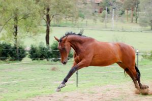 57 Lunge buck WB by Chunga-Stock