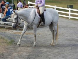 Horse show stock 11 by shush-stock