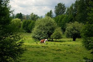 Wild Horses by guitarjohnny
