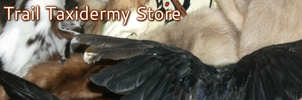 Fox Trail Taxidermy Storenvy Store  NOW OPEN by EternalEmporium