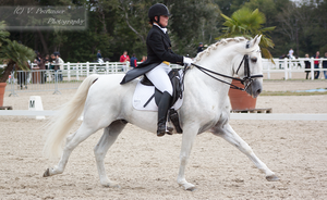 Dressage Cup_171 by CalyHoney