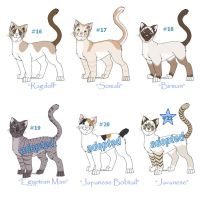 Adoptable Cats Litter 5 by funlakota
