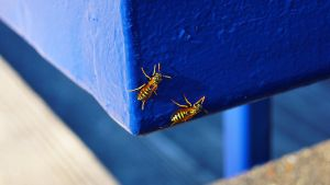 yellow jacket on blue by BubblegumGirl22