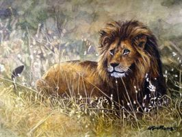 Lion in Grass by WillemSvdMerwe