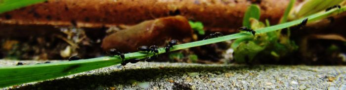 The Ants Go Marching by DemonDisasters