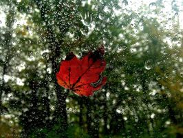 Red Leaf and Rain by brittany4231