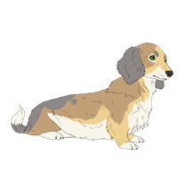 Dachshund adoptable _ closed by LewKat