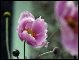 Pink in the Wind by kanes