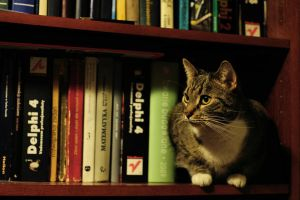 book cat by Wilithin