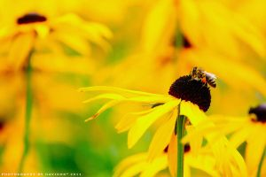 BEE Happy by Havidor