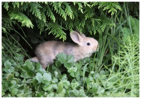 Bunny in the backyard by DysfunctionalKid