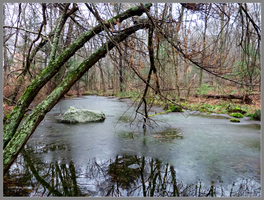 Vernal pool by Mogrianne