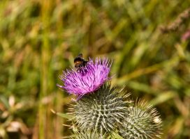 Beesinus No Business by DundeePhotographics