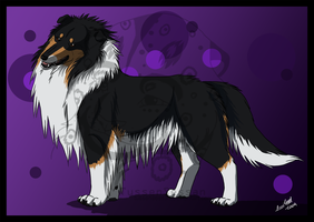 .:Rough Collie:. by tussensessan