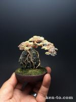 3-color wire bonsai tree on rock by Ken To by KenToArt