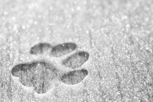 Paw in the snow by PrincessAlbertSwe